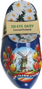 Flower-Clog-Ox-Eye-Daisy-02